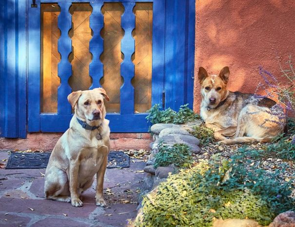 Pets outside a bed and breakfast